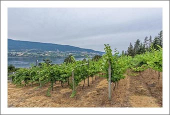 Boutique Vineyard For Sale w/ Lake View and Home