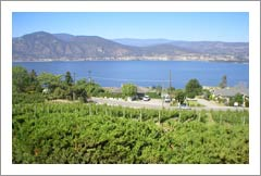 Okanagan Valley Vineyard and Executive Home For Sale - Lake Views - Canada Wine Country Real Estate