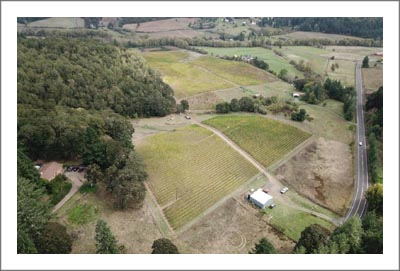 Oregon Vineyard For Sale w/ Home - Polk County Vineyard and Home For Sale - Wine Country Real Estate