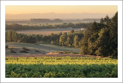 Organic Vineyard For Sale in Oregon - Eola-Amity Hills AVA Vineyard Property - Certified Organic