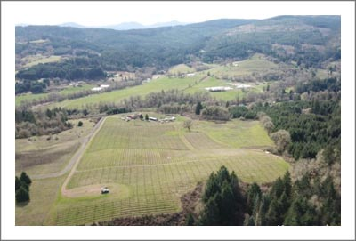 Oregon Vineyard For Sale in the Yamhill-Carlton AVA - Oregon Wine Country Real Estate