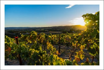 Paso Robles Vineyard For Sale - Westside / Willow Creek AVA Vineyard Property For Sale - Real Estate