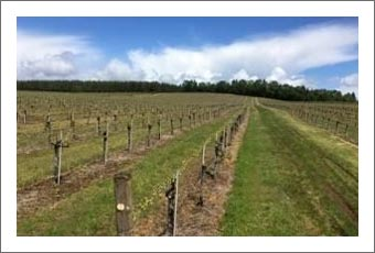 Oregon Vineyard For Sale - Winery Potential & Marketable Timber For Sale - Rebecca's Vineyard
