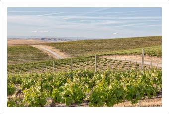 Vineyards For Sale - Large Paso Robles Vineyard For Sale - Good Water  - 90 Acres Plantable - Creston, CA