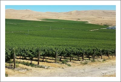 Large Washinton Vineyard For Sale - Washington Wine Country Real Estate