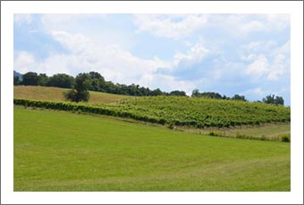Tennessee Vineyard For Sale  w/ Farmhouse and Hay Fields - TN Farm For Sale