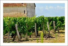 France Vineyard, Home, and Winery For Sale - France, Europe - Wine Real Estate