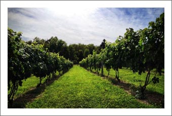 Hudson Valley Boutique Winery and Vineyard For Sale - New York Wine Country Real Estate - New York