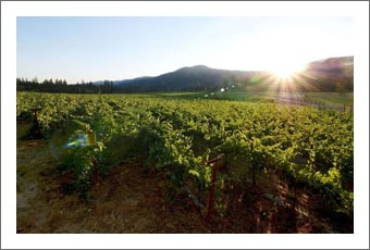 Oregon Vineyard For Sale - Wine Label / Brand and Wine Inventory For Sale - Grants Pass, Oregon Wine Country