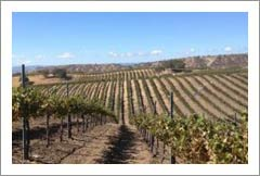 Monterey County Vineyard For Sale - 80 Acres - 21 Acres Planted