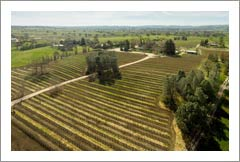 Paso Robles AVA Premium Winery and Vineyard For Sale - Creston Wine Country Real Estate
