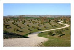 Paso Robles Olive Orchard / Grove For Sale - Creston, CA - Real Estate