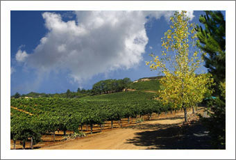 Sonoma County Winery & Vineyard For Sale - Sonoma County Wine Real Estate