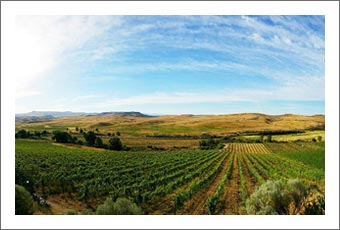 Idaho Ranch, Winery & Vineyard For Sale - 3 Horse Ranch Vineyards - Wine Country Real Estate
