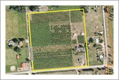 11.56 Acres - Apple Orchard For Sale - Potential Vineyard - British Columbia Real Estate