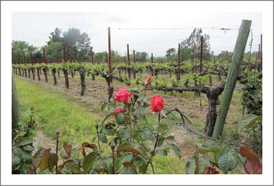 Russian River Valley Winery & Vineyard For Sale - Sonoma County Winery For Sale