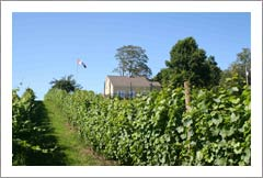 Nova Scotia, Canada - Bear River Winery, Vineyard, and Cottage For Sale - Wine Real Estate