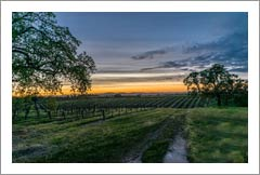 Vineyards For Sale -  Paso Robles Vineyard and Home For Sale - Wine Country Real Estate