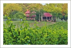 North Carolina Winery, Vineyard and Brewery For Sale