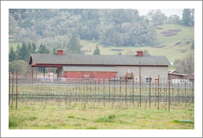 Southern Oregon Winery For Sale - Vineyard - Large Custom Home w/ Farmhouse For Sale - Douglas County Real Estate