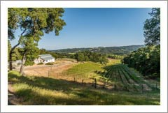 Vineyard For Sale - Westside Templeton Luxury Home & Vineyard For Sale - Paso Robles AVA