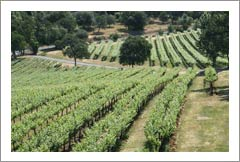 Northern California Winery & Vineyard For Sale - Tuscan Style Villa - Sierra Foothills Wine Country