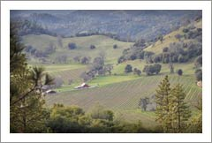 Northern California Winery & Vineyard Auction - Auction - Chatom Winery & Vineyards For Sale  - Calaveras County