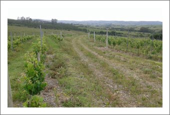 Uruguay Vineyard For Sale - Argentina Private Vineyard Estate For Sale - Finca Real Estate