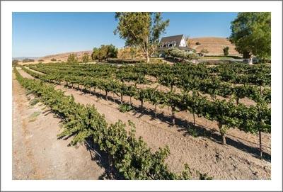Paso Robles AVA Winery  & Vineyard For Sale - Event / Wedding Venue - Creston, CA - La Panza Road