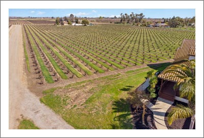 Lodi Vineyard For Sale - Lodi, California Home For Sale w/ Pool - Wine Country Real Estate