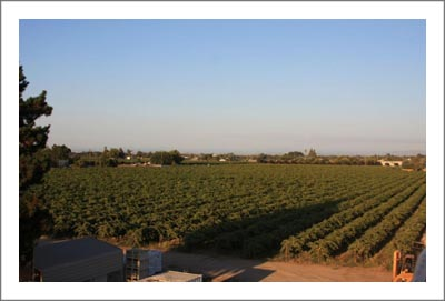 Northern California Winery & Vineyard For Sale - Lodi - Old Vine Zin
