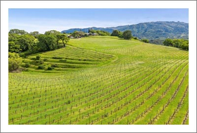 Sonoma Valley Vineyard For Sale - Sonoma Wine Country Home w/ Barns & Ponds