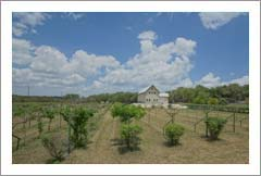 Winery For Sale - Canyon Lake, Tx - Vineyard and Winery For Sale - Hill Country - Wine Real Estate