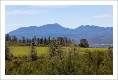 California Vineyard Land For Sale - Lake Coujnty Land For Sale - Wine Country Real Estate