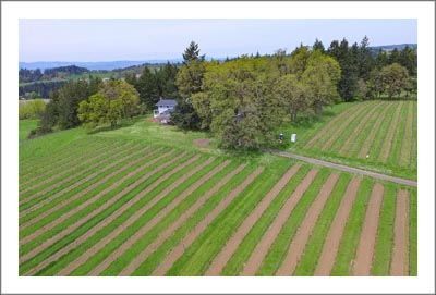 Oregon Farmhouse For Sale - Pinot Noir Vineyard For Sale - Oregon Wine Country Real Estate