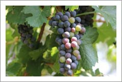 New Mexico Winery and Vineyard For Sale - Profitable and Growing Business