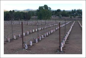 Arizona Farm Store and Vineyard For Sale - Event Venue Potential - 190 Acres