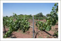 New Mexico Winery and Vineyard For Sale - New Mexico Wine Country Real Estate
