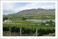 Wineries For Sale - Okanagan Winery, Vineyard and Home For Sale - Located on the Golden Mile!