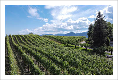 Okanagan Valley - British Columbia Vineyard For Sale - Winery Potential + Lake Views