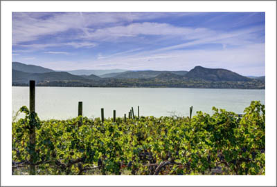 Okanagan Valley - British Columbia Vineyard For Sale - Winery Potential - Possible to Subdivide