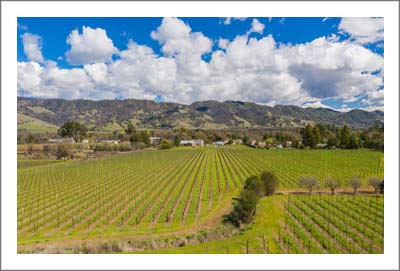 Mendocino County Vineyard For Sale w/ Reservoir and Building Sites - Agricultural Real Estate For Sale