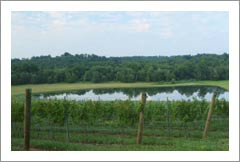 Virginia Vineyard For Sale - 3 Acre Lake - 73 Acres - Real Estate