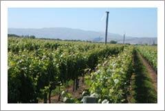 Vineyard For Sale - New Zealand Vineyard For Sale - Lifestyle Property - Martinborough, NZ - NZ Wine Country