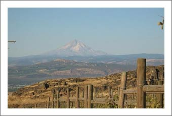 Washington Vineyard For Sale - Klickitat County Real Estate