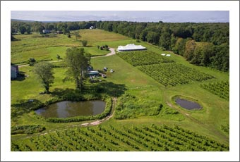 Connecticut Winery, Vineyard and Event Venue For Sale - Connecticut Wine Country Real Estate