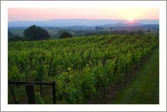 Virginia Winery, Vineyard, and Home For Sale - Virginia Wine Real Estate