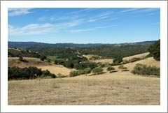 Paso Robles Premium Westside Vineyard Land For Sale - Willow Creek District