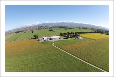 New Zealand Winery & Vineyard Farm For Sale - Julicher Estate - Martinborough Wine