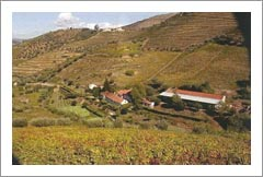 Winery For Sale - Portugal Winery & Vineyard For Sale - European Wine Country Properties